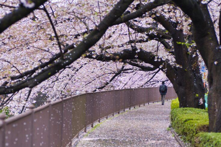 町田は子育てしやすい自然な街